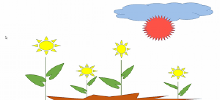 hiệu ứng hoa nở trong powerpoint